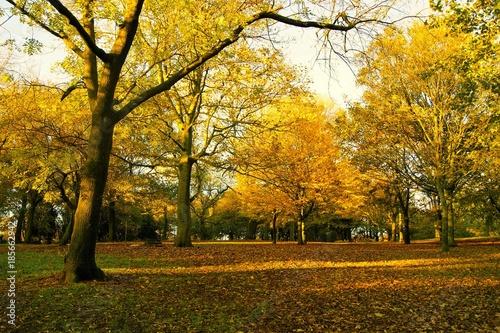 Canvas Prints Honey An image of a colourful Autumn landscape.