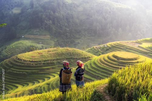 Garden Poster Rice fields Terraced rice field landscape of Mu Cang Chai, Yenbai, Northern Vietnam