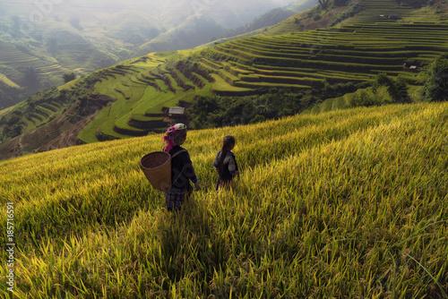 Foto op Plexiglas Rijstvelden Terraced rice field landscape of Mu Cang Chai, Yenbai, Northern Vietnam