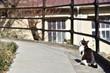 尾道の空を見上げる猫