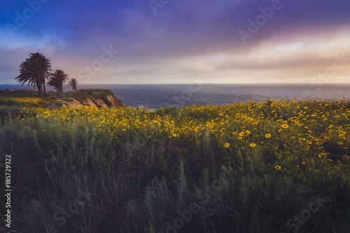Valokuva  Rancho Palos Verdes Super Bloom