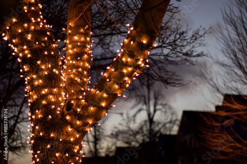 Up close exterior nighttime shallow depth of field stock photo of tree wrapped w Canvas Print