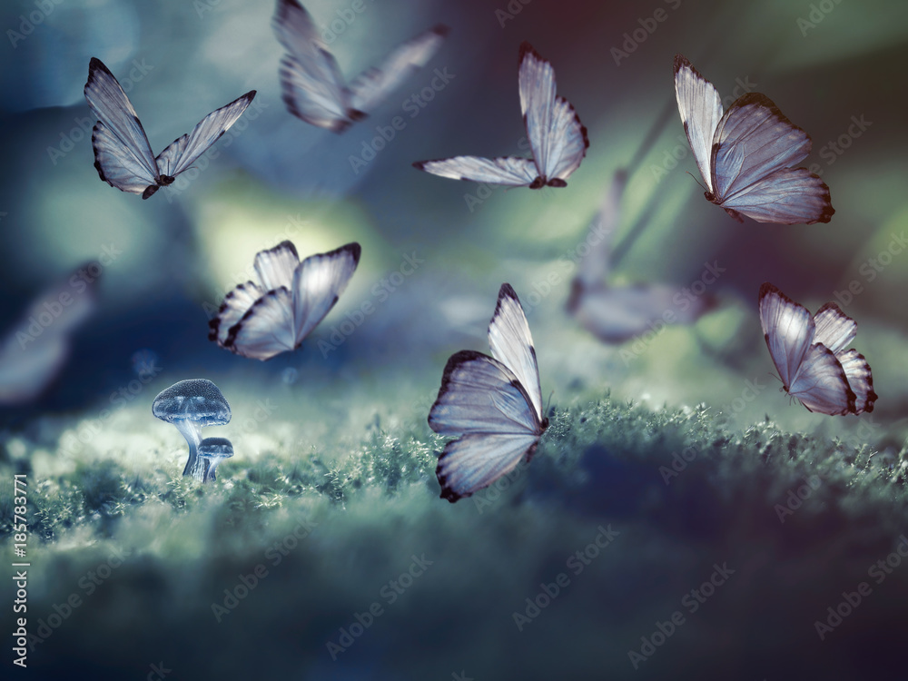 Huge butterflies and the little glowing mushrooms in the woods.