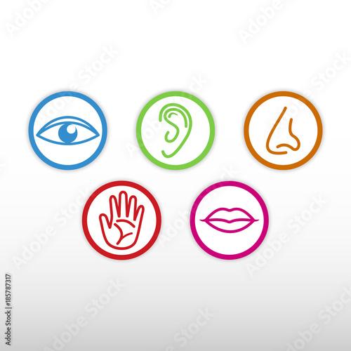 Foto  Five senses icon.