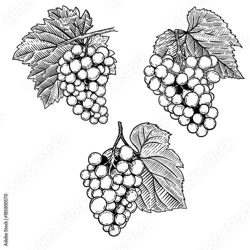 Set of hand drawn grape illustration. Design element for poster, emblem, sign, label, menu, banner. Fototapete