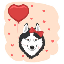 Dog With Red Bow And Heart Balloon. Black And White Siberian Husky Girl. Valentine's Day Greeting Card. Vector Illustration