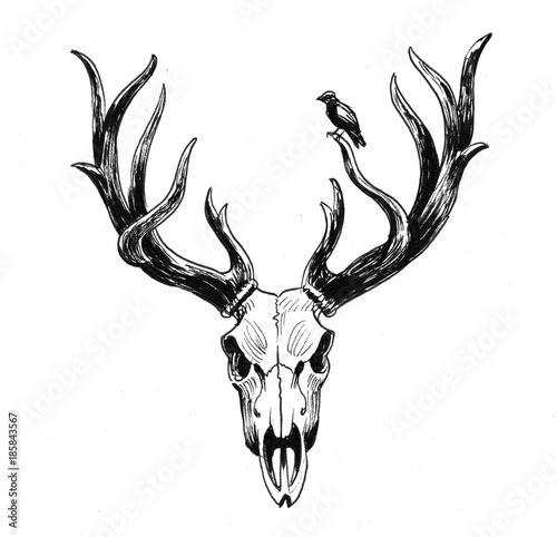 jelen-czaszka-i-ptak