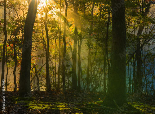 Aluminium Prints Autumn Beautiful autumn background with sun rays beaming through the trees in the forest