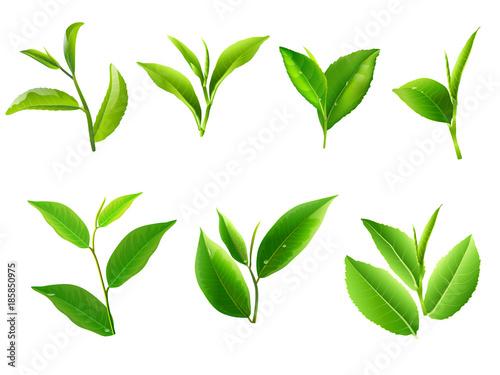 Canvas Prints Condiments Green tea leaf collection set. Vector
