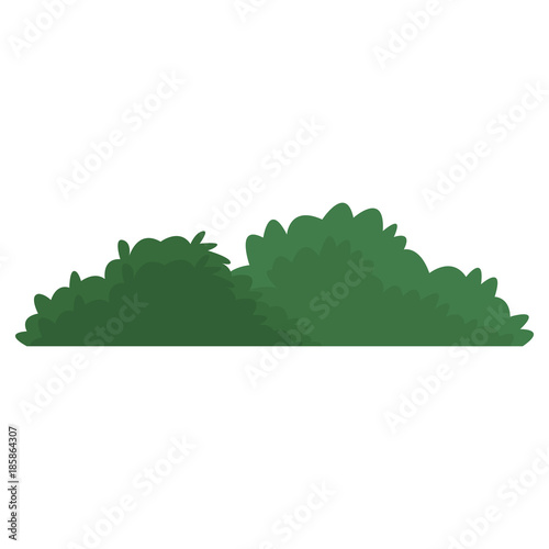 Foto Bush isolated symbol icon vector illustration graphic design
