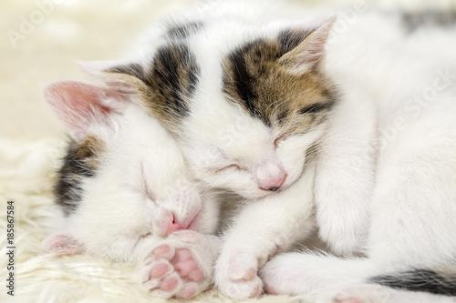 Valokuva Uyuyan kardeş yavru kediler