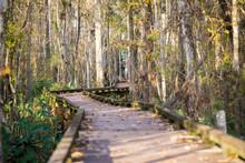 Boardwalk Through The Trees