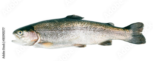 Fototapeta Fresh trout fish isolated on white background