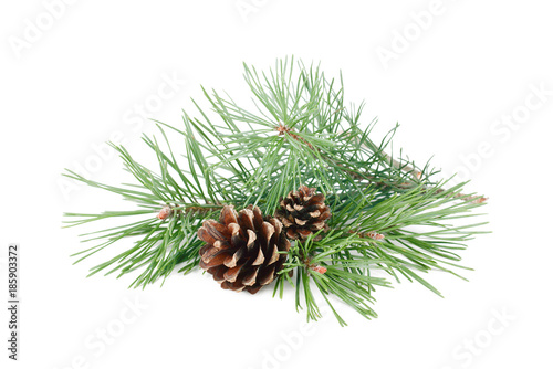 Obraz Pine tree branches with cones isolated on white background. - fototapety do salonu