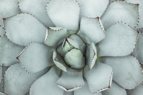 Fotografie, Obraz green succulent plant with thorn on leaf