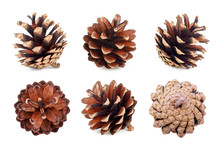 Set Of Pine Cones Isolated On White Background