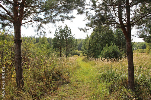 Foto op Plexiglas Leeuw Path in a summer mixed forest. Country landscape.