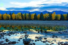 Sunrise Morning On River Rocks With Trees In Blazing Autumn Colors Along The Flathead River, Montana
