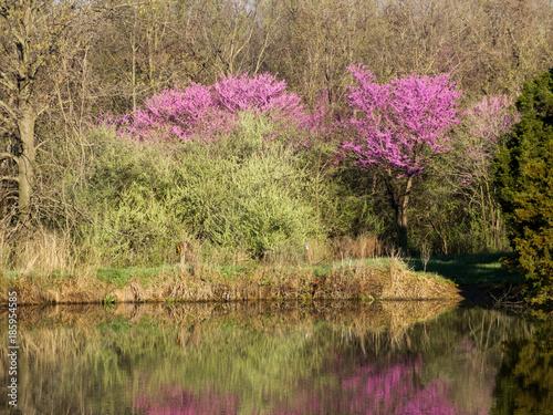 Fotografie, Obraz  Spring Lake