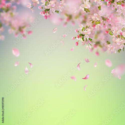 Naklejka Spring Cherry Blossom