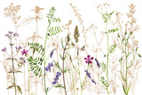akwarela, rysunek kwiatów i roślin - 185975792