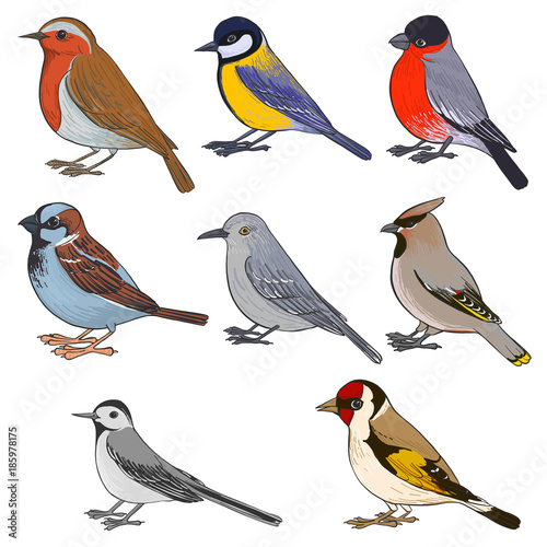 Canvas Print vector set of birds