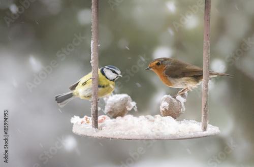 Naklejka premium garden birds in the winter time
