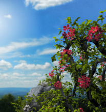 Ivy Flowers Ruins On A Hill