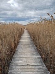 FototapetaA Boardwalk through the Marsh can be a great place for silence and solitude. Located in New England on the Atlantic Coast of Massachusetts