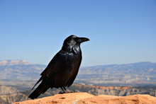 A Crow Sitting On A Rock Wall ...