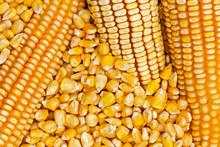 Corn Texture. Yellow Corns As ...