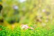 Flowers Plantation Nature Landscape Background