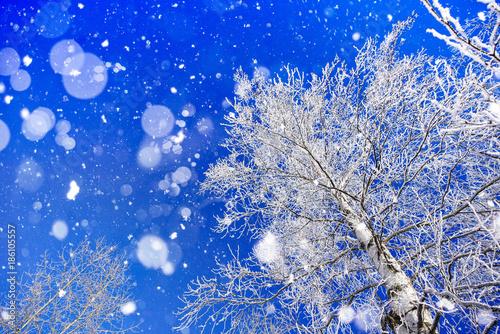 Fotobehang Donkerblauw 冬の白樺