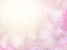Abstract Blurred Cosmos Flower And Bokeh Light With Copy Space For Background