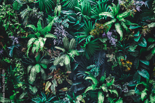 Obraz Beautiful nature background of vertical garden with tropical green leaf - fototapety do salonu