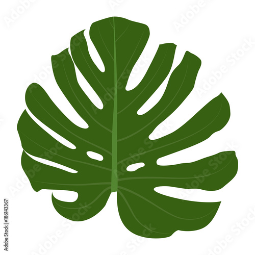 Fotobehang Draw Colorful naturalistic green leaves on branch. Vector Illustratio