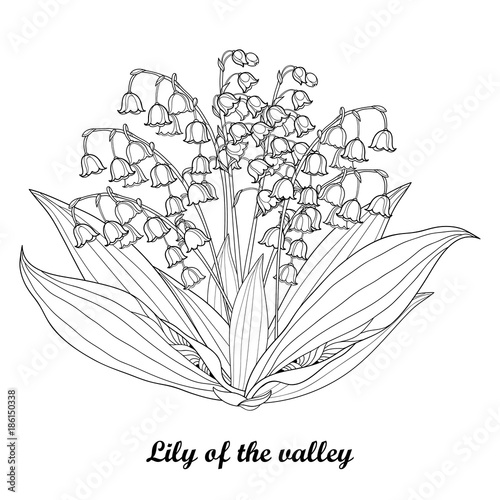 Vector Bouquet With Outline Lily Of The Valley Or Convallaria Flower And Leaf In Black Isolated