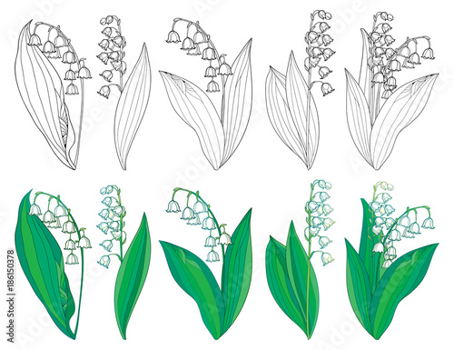 Vector Set With Outline Lily Of The Valley Or Convallaria Flowers