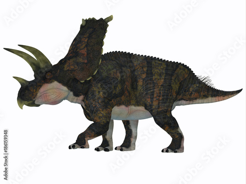 Photo  Bravoceratops Dinosaur Side Profile - Bravoceratops was a herbivorous ceratopsian dinosaur that lived in Texas, USA in the Cretaceous period