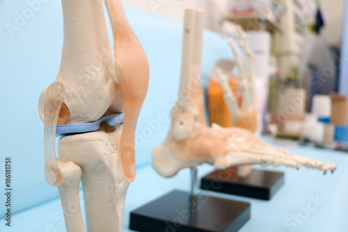 Photo 骨や関節や筋の模型