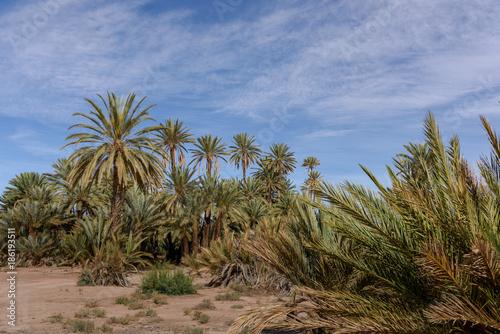 Staande foto Afrika The palmeriaie (oasis) of Skoura