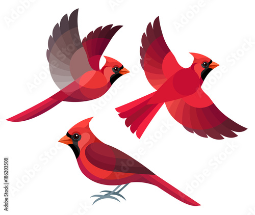 Cuadros en Lienzo Stylized Birds - Northern Cardinal