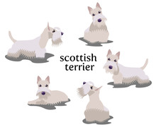 Vector Illustration Of Scottish Terrier In Different Poses Isolated On White Background.