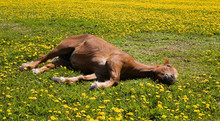Sleeping Horse Summer Moscow