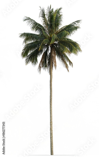 Staande foto Palm boom Coconut palm tree with green leaves isolated on white background
