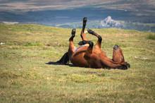 Brown Horse In Dartmoor Nation...