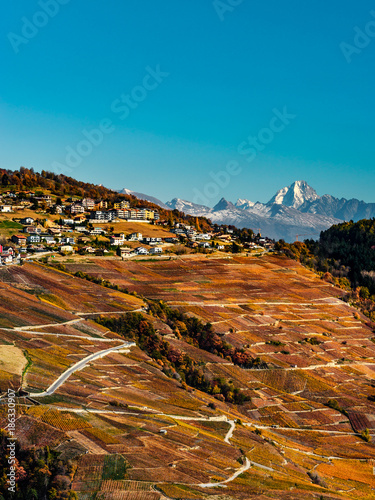 Tuinposter Blauwe jeans Rusty colored autumnal vineards landscape aerial view
