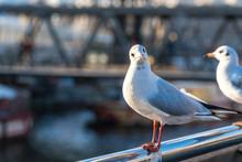 A Seagull Sits On A Railing An...