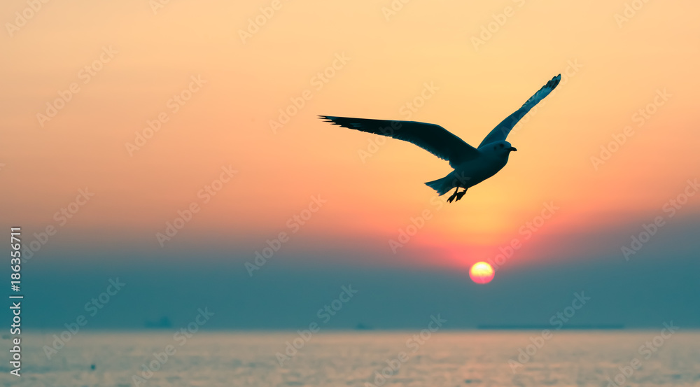 Seagull flying over sea at sunset sky