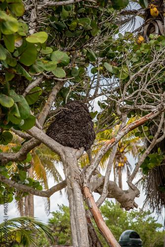 Fotografie, Obraz  Termite Mound Mexico